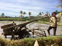 the-mat-movement-rice-farmer-bali